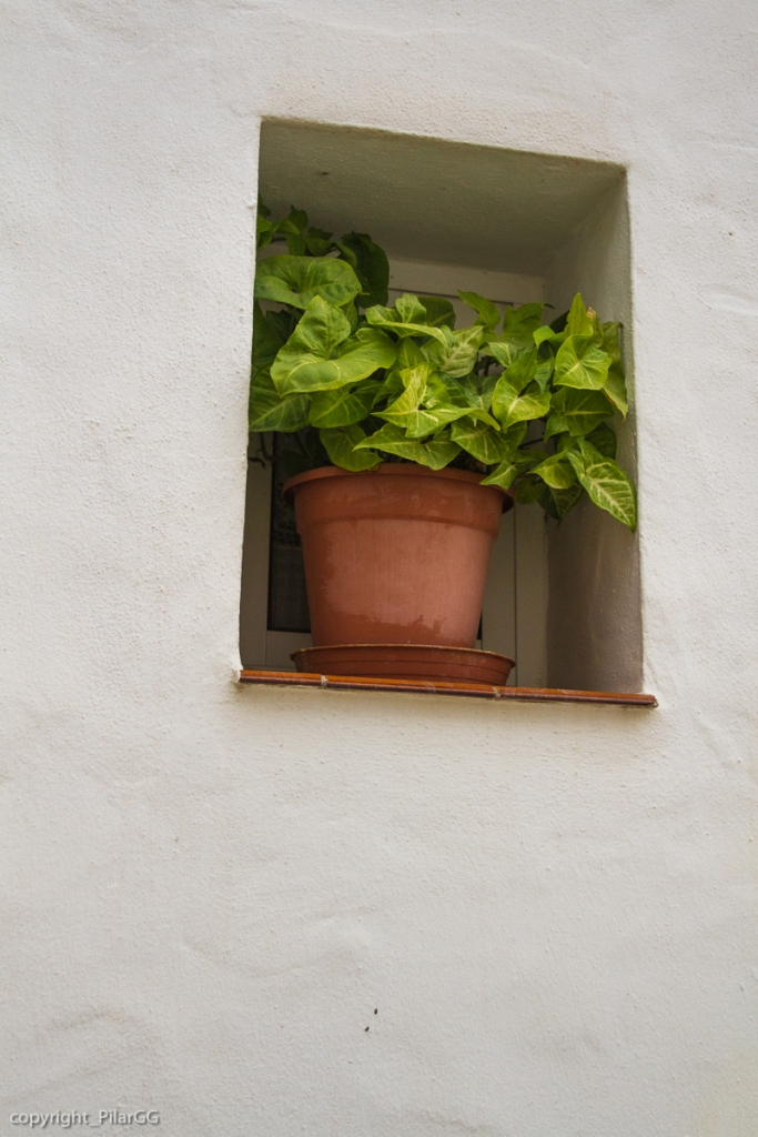 En la pequeña ventana una planta bien cuidada. Cálido y sencillo hogar.